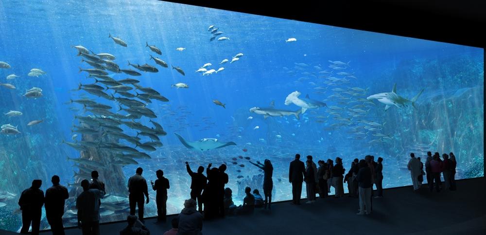 nausicaa_aquarium_boulogne_sur_mer_nord_pas_de_calais_architecture_plus_grand_europe_extension